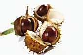 Horse chestnuts, with opened shells