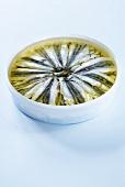A tin of marinated sardines