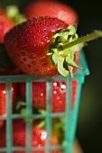 Fresh Strawberries in Plastic Basket