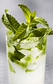 Mojito with Lots of Fresh Mint