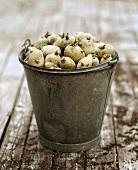 Ein Eimer voll mit ausgetriebenen Kartoffeln