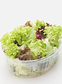 Mixed salad leaves in plastic container