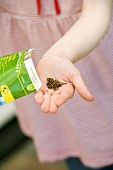 Little girl tipping seeds out of packet into her hand