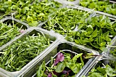 Various salad leaves in plastic containers