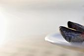 Miesmuschel auf Teller (Close Up)