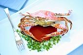 Crab stuffed with minced pork