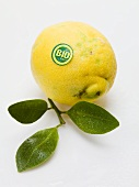 An organic lemon with leaves