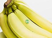 Bio-Bananen