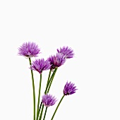 Several chive flowers