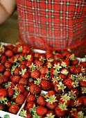 Frische Erdbeeren in Steigen, Frau im Hintergrund