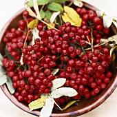 Rowan berries with leaves in a bowl
