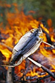 Grilling fish over a campfire
