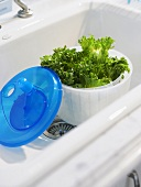 Lettuce in salad spinner in sink