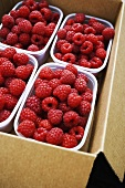 Raspberries in plastic trays