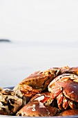 Crabs at the ocean
