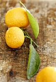 Ornamental oranges with leaves on wooden background