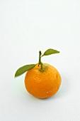 Ornamental orange with leaves