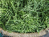 Samphire in a basket