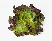 Ein Eichblattsalat