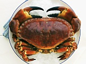 Crab on crushed ice
