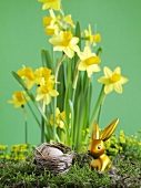 Gold Easter Bunny in front of narcissi