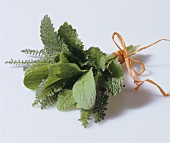 Bunch of herbs: borage, lemon balm and yarrow