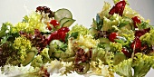 Mixed salad leaves with cucumber slices