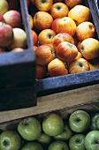 Different kinds of apples in crates