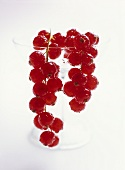 Redcurrants hanging over the rim of a glass