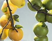 Yellow and green apples