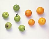 Fünf grüne Äpfel & vier Apfelsinen vor weißem Hintergrund