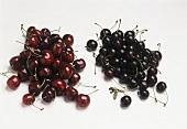 Sweet cherries and sour cherries