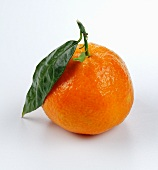 Clementine with leaf