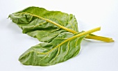 Yellow-stemmed chard leaves