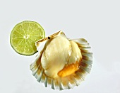 Scallop in shell, slice of lime