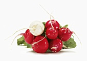 Bunch of Red Radishes with One White Radish