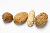 Haselnuss, Mandel, Erdnuss und Walnuss (aufgereiht)