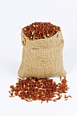 Whole-grain red rice (Oryza sativa)