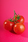 Tomatoes with drops of water (pink background)