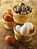 Chicken eggs and quail eggs in a basket