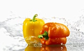 Yellow and orange peppers with splashing water
