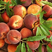 Organic peaches in a basket (close-up)