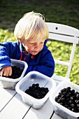 Little boy eating blackberries out of plastic container (outdoors)