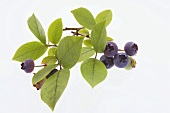Blueberries, cut-out, white background