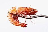 King prawn on fork