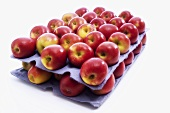 Red apples in trays