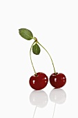 Pair of sour cherries