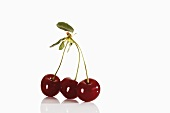 Three sour cherries on stalks