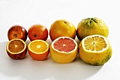 Row of citrus fruit: blood orange, orange, grapefruit, ugli fruit