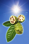 Noni fruits (Morinda Citrifolia)
